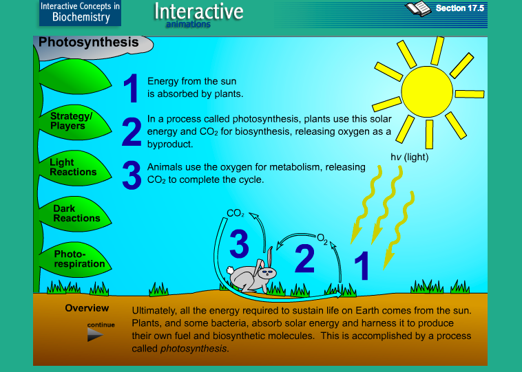 photosynthesis biology practical 61) photosynthesis photosynthesis: is the process by which plants manufacture carbohydrates from raw materials using energy from light light energy is absorbed by chlorophyll - a green substance found in chloroplasts in green plant cells and algae absorbed light energy is used to convert carbon dioxide (from the air) and water (from the.